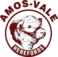 Amos Vale Herefords Logo